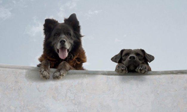 "Dog Days: Bettina Perut and Iván Osnovikoff's ""Los Reyes"""