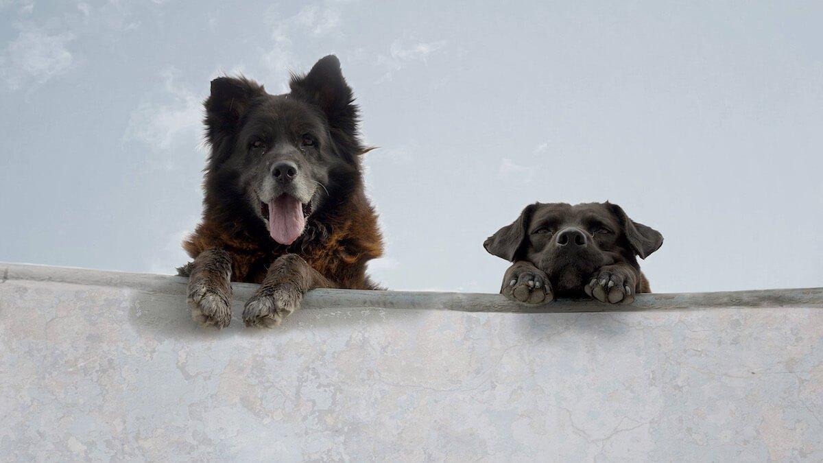 "Andreea Reyes dog days: bettina perut and iván osnovikoff's ""los reyes"